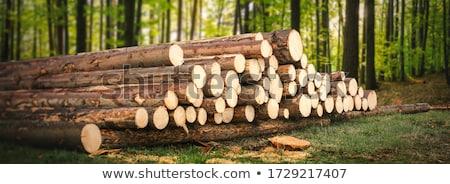 薪 森林 木製 トランクス 準備 輸送 ストックフォト © compuinfoto