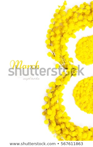 8 march international womens day yellow flower of acacia and lettering text on transparent backgrou stock photo © orensila