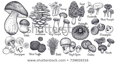 vector illustrations of mushrooms Stock photo © frescomovie