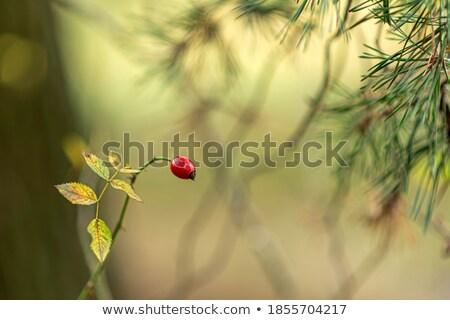 красный листьев осень Дания Сток-фото © jeancliclac