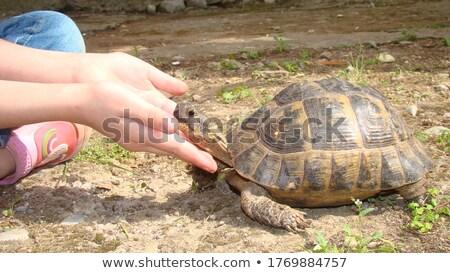 dreaming little turtle stock photo © cthoman