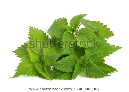 Yaprakları yalıtılmış beyaz gıda yeşil tıp Stok fotoğraf © bdspn