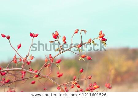 Romantizm sonbahar doğa sahne kırmızı doku Stok fotoğraf © fotoduki