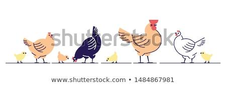 Drób kurczaka pisklęta ilustracja kura wewnątrz Zdjęcia stock © lenm