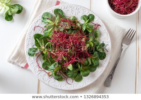 Salad with lamb's lettuce and red beet sprouts Stock photo © madeleine_steinbach
