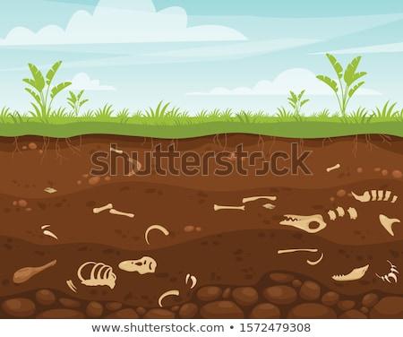 Ondergrondse scène botten illustratie natuur landschap Stockfoto © colematt