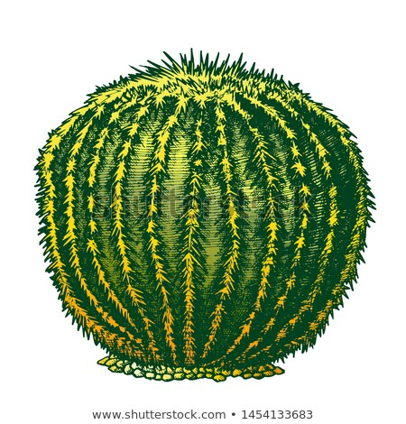 Color Round Desert Plant Cactus Ink Hand Drawn Vector Stock photo © pikepicture