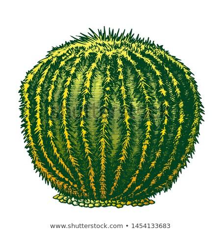 Color desierto planta cactus tinta dibujado a mano Foto stock © pikepicture