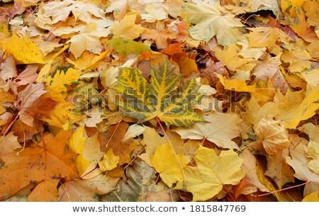 Güzellik karşılaştırma kurutulmuş yaprak taze yeni Stok fotoğraf © lichtmeister