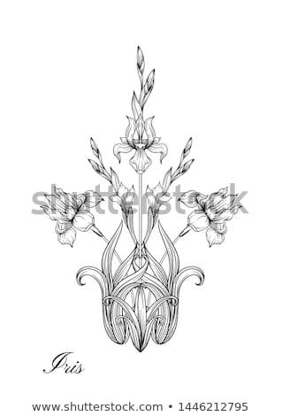 Iris · fiore · viola · bianco · giardino · verde - foto d'archivio © neirfy