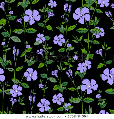 pattern with meadow flowers and herbs on Dark blue background.  Stock photo © Margolana