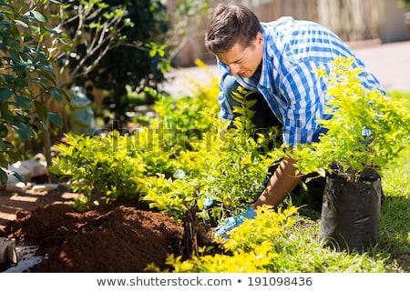Handsome young man gardening in his garden Stock photo © lightpoet