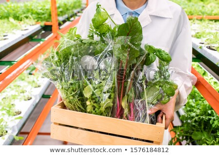 Packed leaves of vegetables in wooden box carried by female agronomist Stock photo © pressmaster