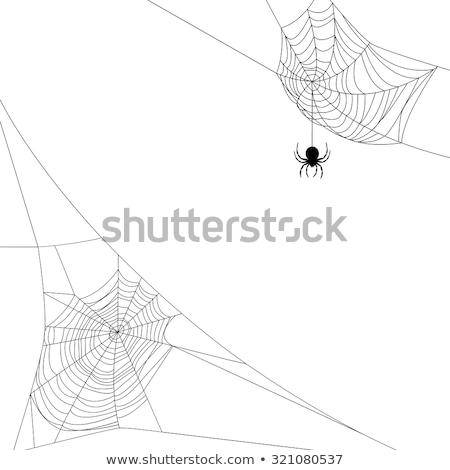 Halloween spinnen web 2 kan vinden soortgelijk Stockfoto © AnnaVolkova
