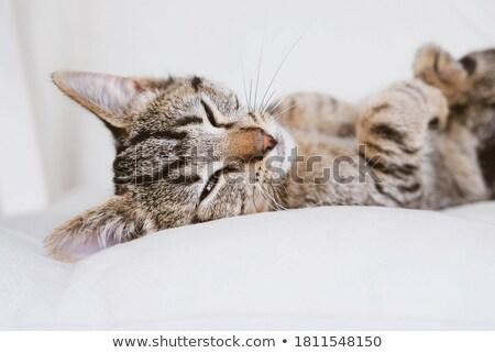 Kat portret expressief Stockfoto © fxegs