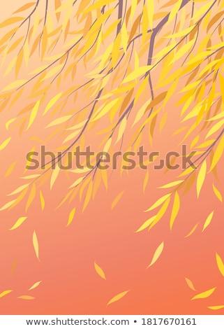 Fűzfa ősz fa áll szőnyeg narancs Stock fotó © Hofmeester