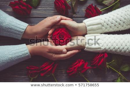 piros · rózsa · sötét · gyönyörű · űr · szöveg · rózsa - stock fotó © photography33