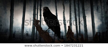 Evil Crow Stock photo © cteconsulting