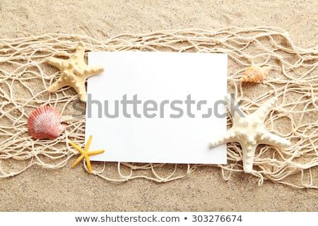 ストックフォト: 白 · 紙 · ビーチ · シェル · 孤立した · 抽象的な