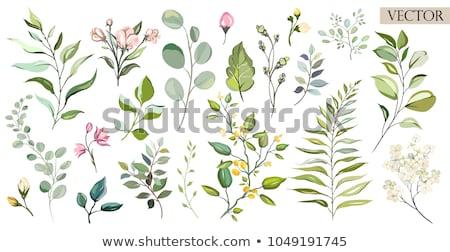 Virág növény alkotóelem szett tavasz természet Stock fotó © creative_stock