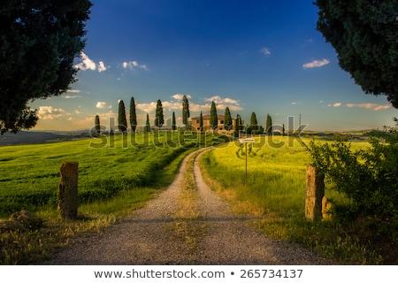 Toskana · tepeler · ev · ağaç · bahar · çim - stok fotoğraf © lianem