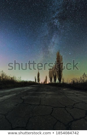 Azul dramático céu inverno desfolhada álamo Foto stock © lunamarina