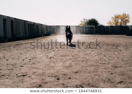 nagy · öreg · kutya · lánc · ház · arc - stock fotó © pavelkozlovsky