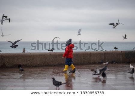 seagulls walking on the street Stock photo © meinzahn