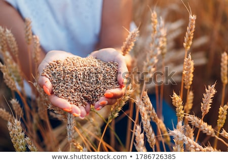 női · gazdák · kezek · szójabab · mező · felelős - stock fotó © nejron