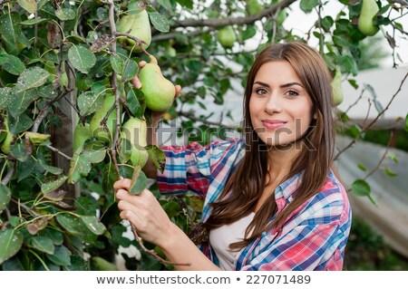 ストックフォト: 作り出す · フルーツ · 女性 · 梨 · 孤立した