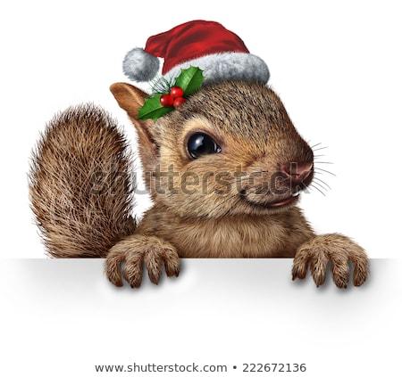 Vakantie eekhoorn verticaal teken Stockfoto © Lightsource