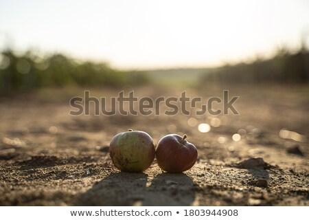 яблоки небе дерево трава природы Сток-фото © olandsfokus