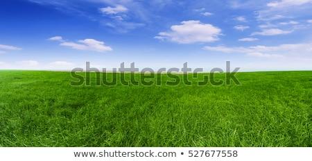 травянистый области прямой вперед зеленый весны Сток-фото © oblachko