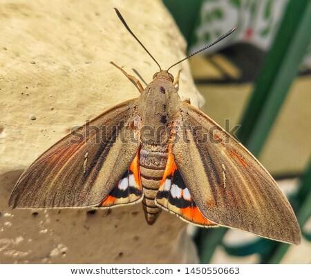 borboleta · retrato · estudar · banana · parque · sombra - foto stock © t3rmiit