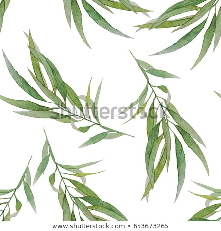 aquarela · pintado · conjunto · floral · plantas · projeto - foto stock © pakete