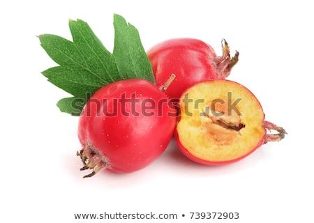 hawthorn fruit on green branch stock photo © tarczas