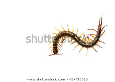 desenho · animado · lagarta · falante · retro · desenho - foto stock © bluering