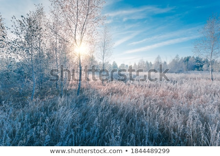 Mattina gelo fiore macro foto acqua Foto d'archivio © Nneirda