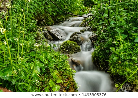 Berg stream sneeuw schoonheid cool Europa Stockfoto © IS2