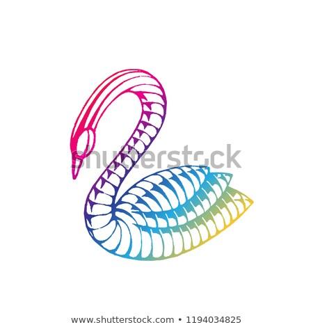 Rainbow colorato inchiostro sketch Swan illustrazione Foto d'archivio © cidepix