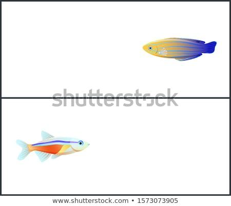 Blu strisce illustrazione poster acquario marine Foto d'archivio © robuart