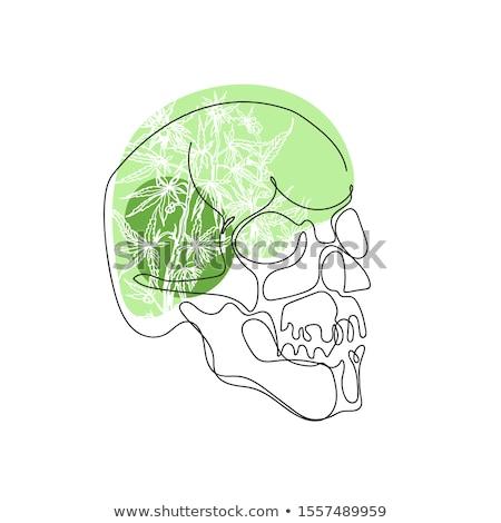 Sketch, skull rastaman. Stock photo © netkov1
