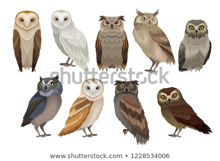 vector set of owls Stock photo © olllikeballoon