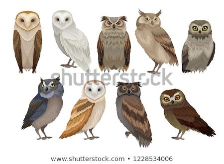 vector set of owls stock fotó © olllikeballoon