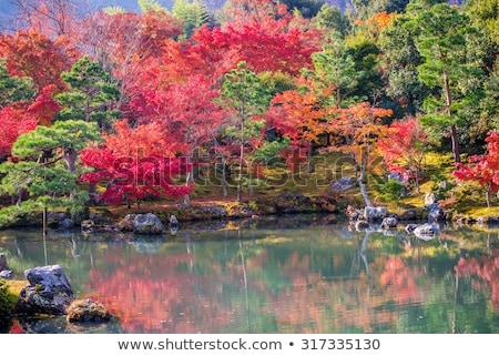 Fenyőfa fák kertek park Tokió természet Stock fotó © dolgachov