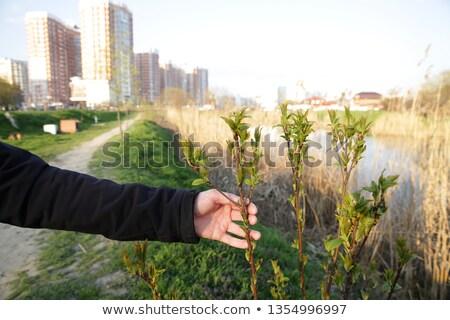 人間 · 手 · 地球 · 工場 · 芽 - ストックフォト © galitskaya