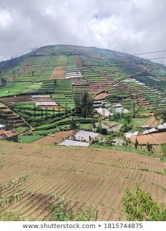 Panorama view of southeast asia countryside Stock photo © vapi