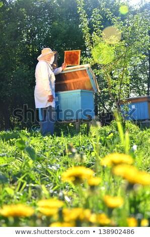 çalışma çizim dışarı petek kovan arılar Stok fotoğraf © przemekklos