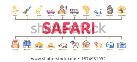 Safari Travel Minimal Infographic Banner Vector Stock photo © pikepicture