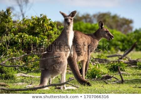 Kettő bokor föld vad természet Stock fotó © lovleah